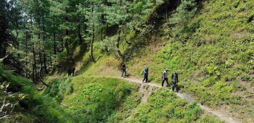 Trekking through the lush green pine forest