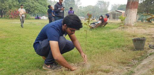 Tree plantation at Changa Manga Forest, Pakistan